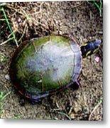 Painted Turtle Metal Print