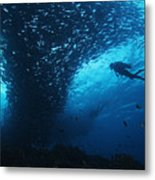 Palau, Diving Metal Print by Dave Fleetham - Printscapes