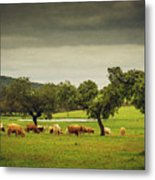 Pasturing Cows Metal Print