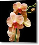 Peach Orchids Metal Print