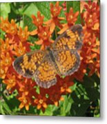 Pearly Crescentspot Butterfly Metal Print
