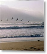 Pelican Brief Metal Print