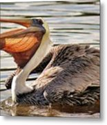 Pelican Catching A Fish Metal Print