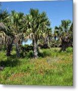 Pelican Island In Florida Metal Print