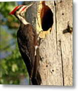 Pileated #26 Metal Print