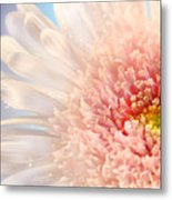Pink Daisy  Metal Print by Sandra Cunningham