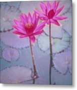 Pink Lily Blossom Metal Print