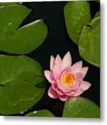 Pink Lotus Waterlily Metal Print
