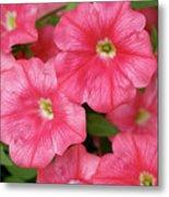 Pink Petunias Metal Print