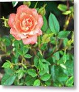 Pink Rose In The Garden Metal Print