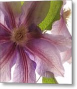 Pink Tenderness Metal Print
