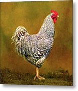 Plymouth Rock Rooster Metal Print