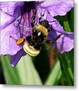Pollination 2 Metal Print
