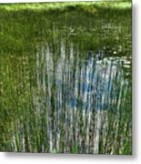 Pond Grasses Metal Print