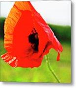 Poppy The Beauty Metal Print