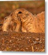 Prairie Dog Tender Sunset Kiss Metal Print