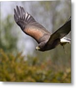 Prepare For Landing Metal Print