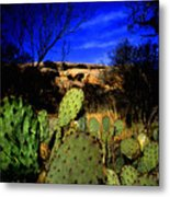 Prickly Pears Enchanted Rock Texas Metal Print