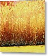 Pueblo Downtown River Grasses 4 Metal Print
