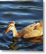 Puffy Headed Duck Metal Print