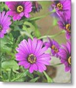 Purple Aster Flowers Metal Print