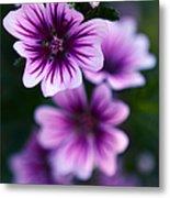 Purple Beauties Metal Print
