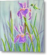 Purple Dutch Iris And Hummer Metal Print