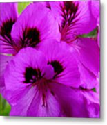 Purple Flowers  Metal Print