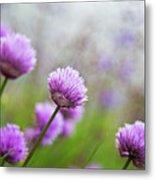 Purple Spring 7 Metal Print