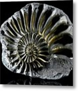 Pyritized Ammonite Metal Print