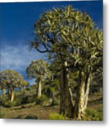 Quiver Tree Forest Metal Print