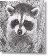 Raccoon Kit Metal Print