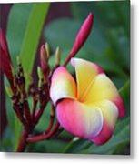 Rainbow Plumeria Metal Print