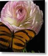 Ranunculus And Butterfly Metal Print