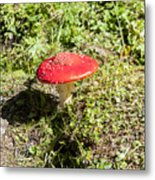 Red And White Potted Toadstool Metal Print
