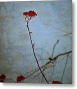 Red Berries Blue Sky Metal Print