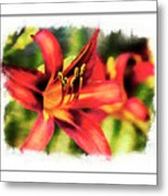 Red Daylily Metal Print