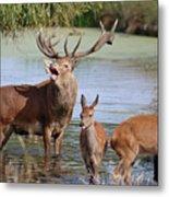 Red Deer In Bushy Park London Metal Print