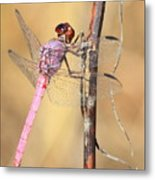 Red Dragonfly Portrait Metal Print