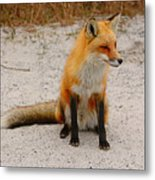 Red Fox 3 Metal Print
