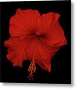 1- Red Hibiscus Metal Print