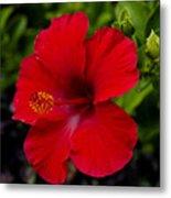 Red Hibiscus - Kauai Metal Print