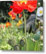 Red Iceland Poppy Metal Print
