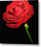 Red Rose On The Black Background  Metal Print