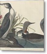 Red-throated Diver Metal Print