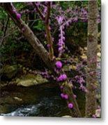 Redbud And River Metal Print
