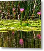 Reflective Wild Water Lilies Metal Print