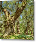 Relaxing Planes Trees Arbor Metal Print