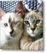 Rescued And Spoiled Metal Print