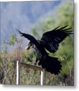 Resident Raven Metal Print